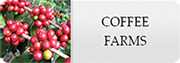 coffee farms