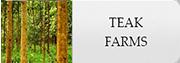 teak farms